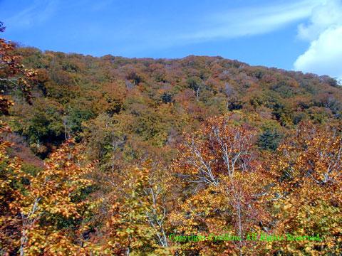 玉川温泉の手前2キロの紅葉2002年10月撮影