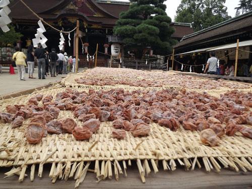 京都 北野天満宮の梅の天日干し